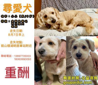 珠海找狗,珠海香洲區前山-尋愛犬,它是一只非常可爱的宠物狗狗,希望它早日回家,不要变成流浪狗。
