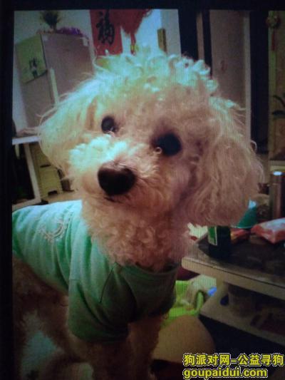 【西安找狗】,寻找白色泰迪狗狗,短毛,特点尾巴比较短,走的时候嘴上带了嘴套,公狗四岁半了,名字叫拉客(LUCKY),它是一只非常可爱的宠物狗狗,希望它早日回家,不要变成流浪狗。