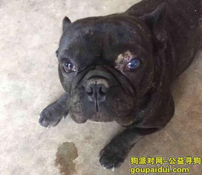 【九江找狗】,黑色雄法斗走失!提供线索者或帮忙寻回者必有重谢!,它是一只非常可爱的宠物狗狗,希望它早日回家,不要变成流浪狗。