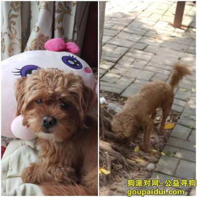 佛山找狗,三水乐平寻狗 : 遇到的请联系下有偿,它是一只非常可爱的宠物狗狗,希望它早日回家,不要变成流浪狗。