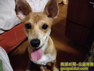 无锡找狗,无锡市东北塘寻狗,急!!!,它是一只非常可爱的宠物狗狗,希望它早日回家,不要变成流浪狗。