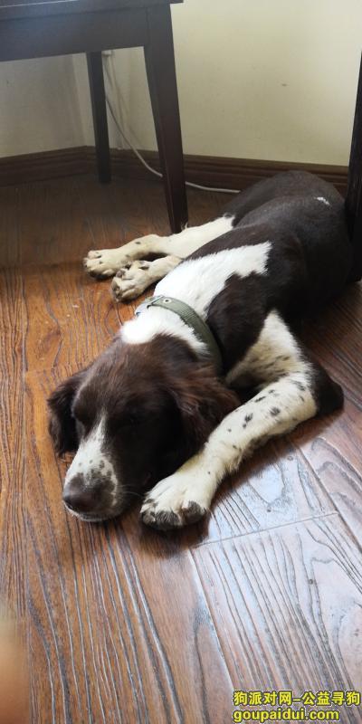 温州寻狗启示,在温州市六虹桥路铁路西货场附近工地捡到狗狗一只,它是一只非常可爱的宠物狗狗,希望它早日回家,不要变成流浪狗。