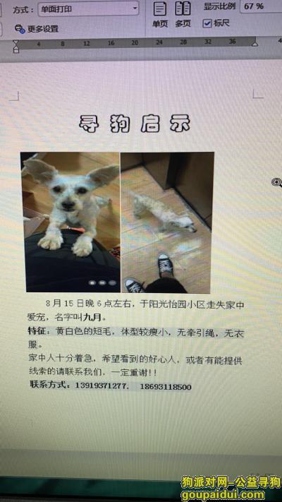 【兰州找狗】,安宁区阳光怡园小区附近,它是一只非常可爱的宠物狗狗,希望它早日回家,不要变成流浪狗。