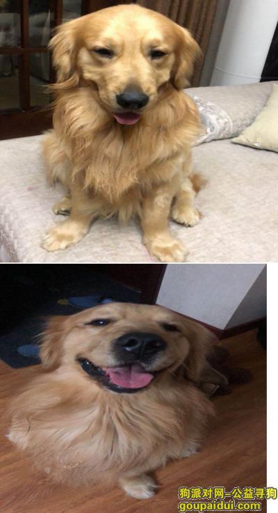 蚌埠丢狗,蚌埠禹会区长青乡陈郢小学酬谢八千元寻找金毛,它是一只非常可爱的宠物狗狗,希望它早日回家,不要变成流浪狗。