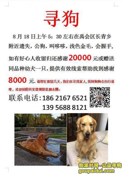 蚌埠寻狗,蚌埠禹会区长青乡陈郢小学酬谢2万元寻找金毛,它是一只非常可爱的宠物狗狗,希望它早日回家,不要变成流浪狗。