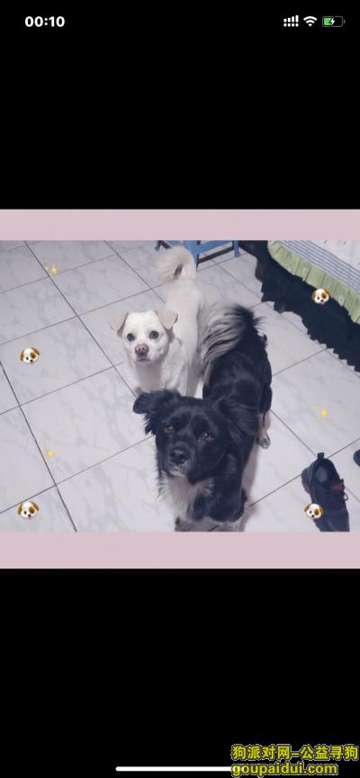 【呼和浩特找狗】,求助好心人寻回爱犬!,它是一只非常可爱的宠物狗狗,希望它早日回家,不要变成流浪狗。