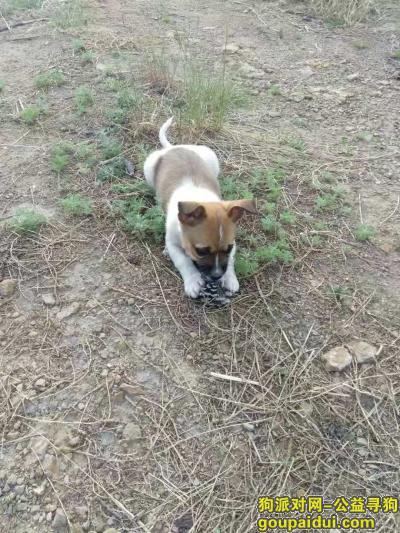 大同寻狗启示,求爱犬回家!求好心人相助!,它是一只非常可爱的宠物狗狗,希望它早日回家,不要变成流浪狗。