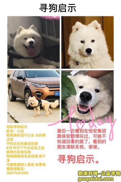 孝感寻狗启示,湖北省孝感萨摩耶小白丢失,它是一只非常可爱的宠物狗狗,希望它早日回家,不要变成流浪狗。