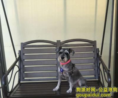 唐山寻狗启示,河北省唐山市丰润区找狗,它是一只非常可爱的宠物狗狗,希望它早日回家,不要变成流浪狗。