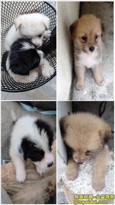 青岛捡到狗,可爱狗狗寻找有缘有爱心的主人,它是一只非常可爱的宠物狗狗,希望它早日回家,不要变成流浪狗。