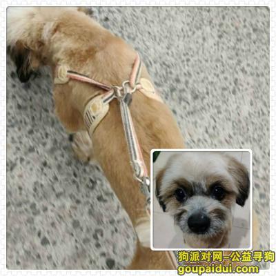 郑州找狗,寻找来福 必有重谢 郑州沈庄新城南区走丢,它是一只非常可爱的宠物狗狗,希望它早日回家,不要变成流浪狗。