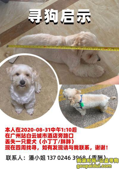 广州找狗,找狗-广州站旁(中铁快运与白云城市酒店入口处),它是一只非常可爱的宠物狗狗,希望它早日回家,不要变成流浪狗。