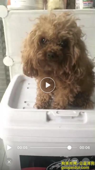 郑州寻狗网,郑州贾鲁河苏屯橡胶坝旁边找小泰迪,捡到的好心人定重谢,它是一只非常可爱的宠物狗狗,希望它早日回家,不要变成流浪狗。
