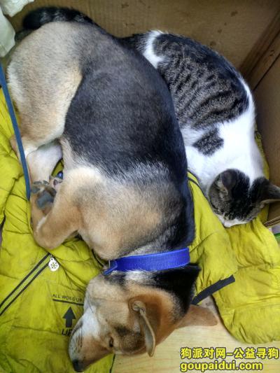桂林丢狗,狗狗走丢,有好心人看到,请联系我谢谢,它是一只非常可爱的宠物狗狗,希望它早日回家,不要变成流浪狗。