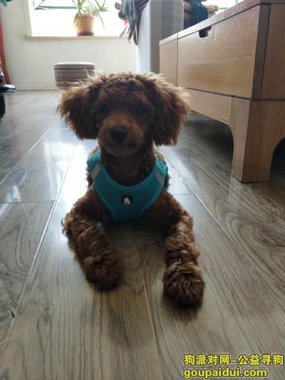 淄博寻狗网,请帮小豆包回家,她的姐姐和爸爸妈妈在等她,它是一只非常可爱的宠物狗狗,希望它早日回家,不要变成流浪狗。