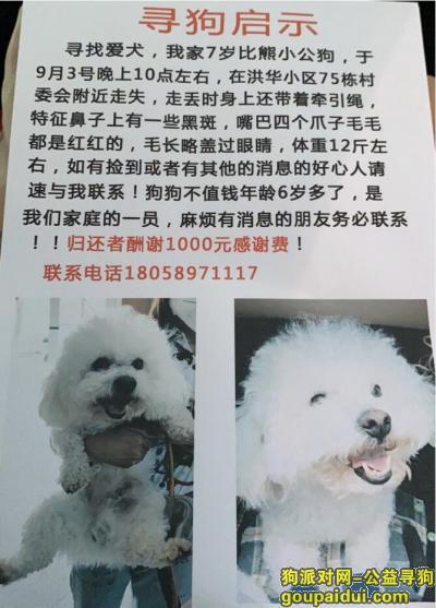 义乌丢狗,义乌洪华找狗:2000元找回毛孩子,妈妈在等你回家,它是一只非常可爱的宠物狗狗,希望它早日回家,不要变成流浪狗。