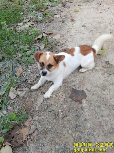 周口找狗,我家的狗子九月六号走丢 一直到现在都没回家,它是一只非常可爱的宠物狗狗,希望它早日回家,不要变成流浪狗。