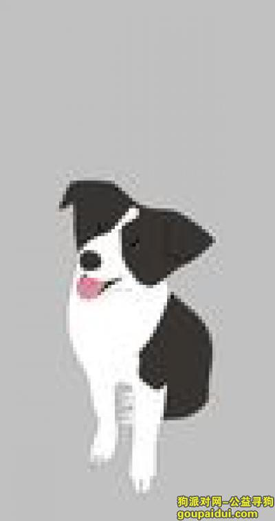 郑州寻狗,已找到,不会删帖~~~~~~~~~~~~~~~~~~,它是一只非常可爱的宠物狗狗,希望它早日回家,不要变成流浪狗。