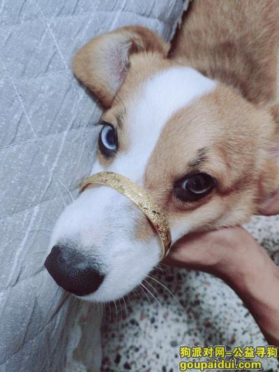 曲靖找狗,狗狗已经找到了 谢谢大家,它是一只非常可爱的宠物狗狗,希望它早日回家,不要变成流浪狗。