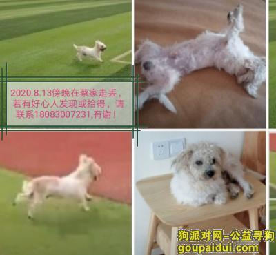 重庆寻狗启示,宝贝快回家,一直在寻你!,它是一只非常可爱的宠物狗狗,希望它早日回家,不要变成流浪狗。