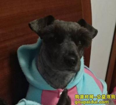 南京找狗,南京找狗:兴贤佳园附近丢失雪纳瑞,它是一只非常可爱的宠物狗狗,希望它早日回家,不要变成流浪狗。
