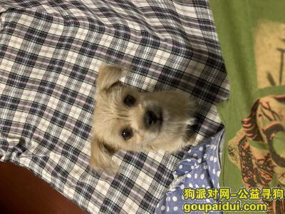 无锡找狗,谁抱走了我的妞妞(9/7江阴市周庄镇大西街附近),它是一只非常可爱的宠物狗狗,希望它早日回家,不要变成流浪狗。