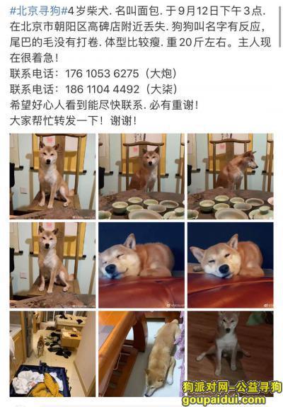 寻爱犬面包电环17610536275,它是一只非常可爱的宠物狗狗,希望它早日回家,不要变成流浪狗。