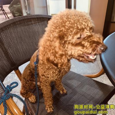 佛山捡到狗,桂城禅城附近捡到狗, 泰迪公,它是一只非常可爱的宠物狗狗,希望它早日回家,不要变成流浪狗。