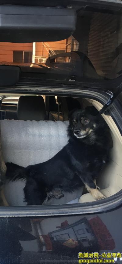 忻州寻狗启示,重金寻黑色四眼小公狗,它是一只非常可爱的宠物狗狗,希望它早日回家,不要变成流浪狗。