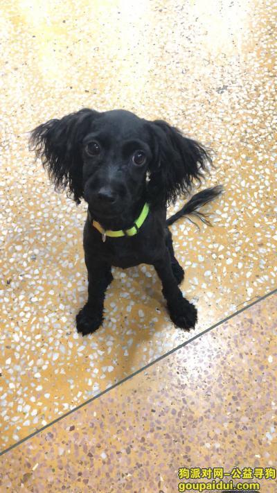 捡到狗,坐标半引路  小狗寻找主人,它是一只非常可爱的宠物狗狗,希望它早日回家,不要变成流浪狗。