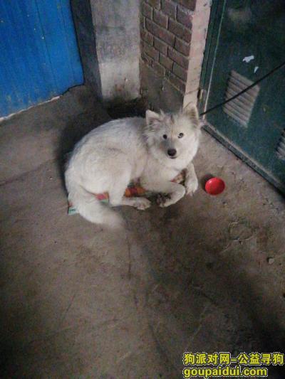 捡到狗,晶彩中心附近捡到一只狗,它是一只非常可爱的宠物狗狗,希望它早日回家,不要变成流浪狗。
