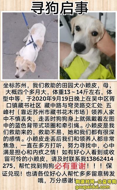苏州寻狗,小田园犬走失,望好心人看到提供线索,找回必有酬谢,它是一只非常可爱的宠物狗狗,希望它早日回家,不要变成流浪狗。