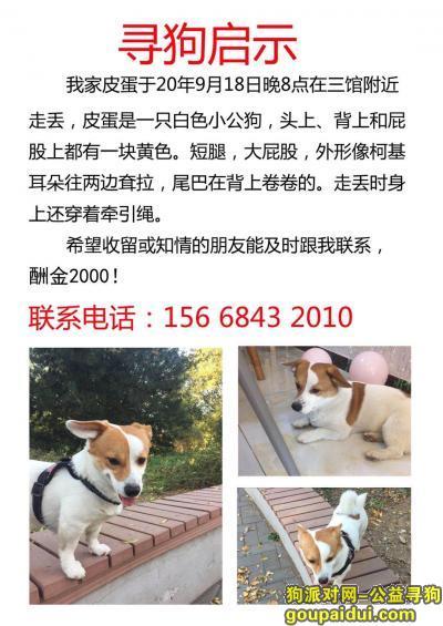 济南寻狗启示,济南历城区三馆酬谢2000元寻找狗狗,它是一只非常可爱的宠物狗狗,希望它早日回家,不要变成流浪狗。
