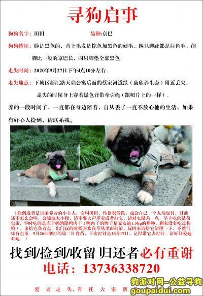 杭州丢狗,寻狗田田回家,黑脸高脚京巴,它是一只非常可爱的宠物狗狗,希望它早日回家,不要变成流浪狗。