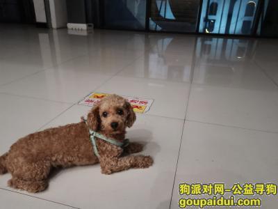 自贡寻狗启示,富顺县狗狗一半于千盛广场走掉有见到或者捡到的朋友请联系我们18081490458,它是一只非常可爱的宠物狗狗,希望它早日回家,不要变成流浪狗。