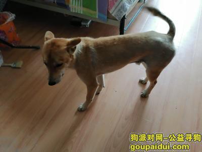 寻狗,谢谢寻狗寻爱犬,它是一只非常可爱的宠物狗狗,希望它早日回家,不要变成流浪狗。