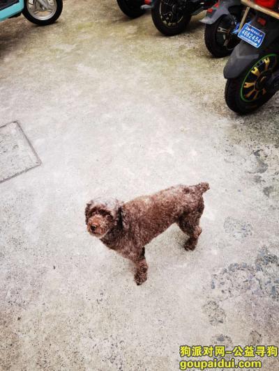 【上海找狗】,已找到狗子了,好幸运,它是一只非常可爱的宠物狗狗,希望它早日回家,不要变成流浪狗。