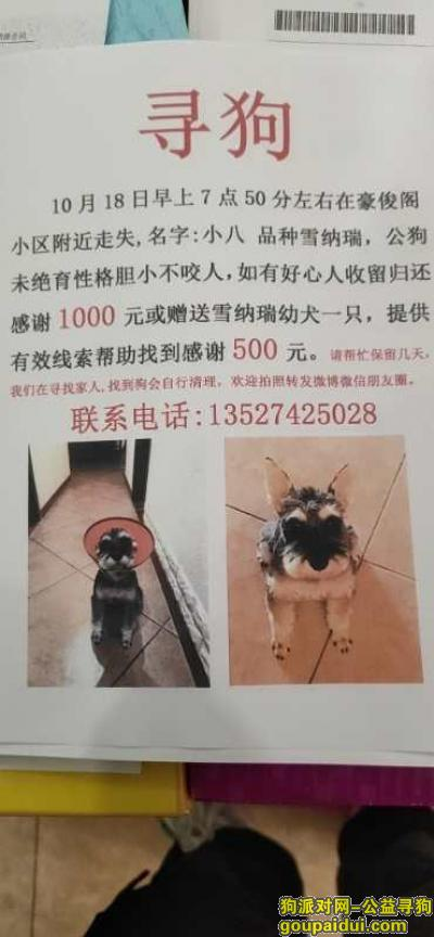 寻狗启示,重庆大渡口豪俊阁小区寻找雪纳瑞,它是一只非常可爱的狗狗,希望狗狗早日回家,不要变成流浪狗。