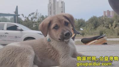 十堰找狗,寻狗启示。请爱心人士帮忙留意。感谢。,它是一只非常可爱的宠物狗狗,希望它早日回家,不要变成流浪狗。
