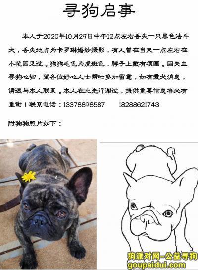 玉溪找狗,通海寻狗:暂代收养或提供重要信息者必有重谢!!,它是一只非常可爱的宠物狗狗,希望它早日回家,不要变成流浪狗。