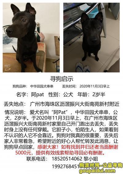 广州丢狗,广州沥滘存寻狗启示!有偿,它是一只非常可爱的宠物狗狗,希望它早日回家,不要变成流浪狗。