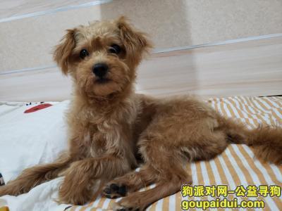 南京找狗,寻找2岁黄色串串,8斤,它是一只非常可爱的宠物狗狗,希望它早日回家,不要变成流浪狗。
