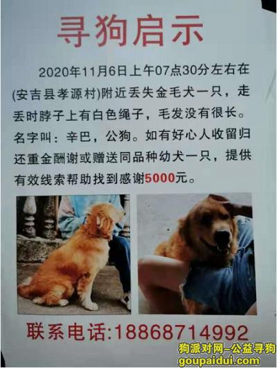 湖州寻狗启示,湖州市安吉县孝源村酬谢五千元寻找金毛,它是一只非常可爱的宠物狗狗,希望它早日回家,不要变成流浪狗。