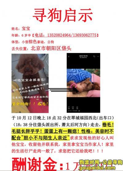 【北京找狗】,北京朝阳区垡头1万元寻泰迪❗❗,它是一只非常可爱的宠物狗狗,希望它早日回家,不要变成流浪狗。