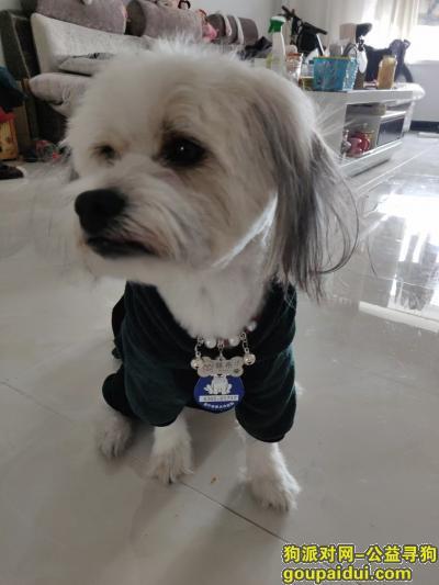 2000元酬谢找我家狗狗,它是一只非常可爱的宠物狗狗,希望它早日回家,不要变成流浪狗。