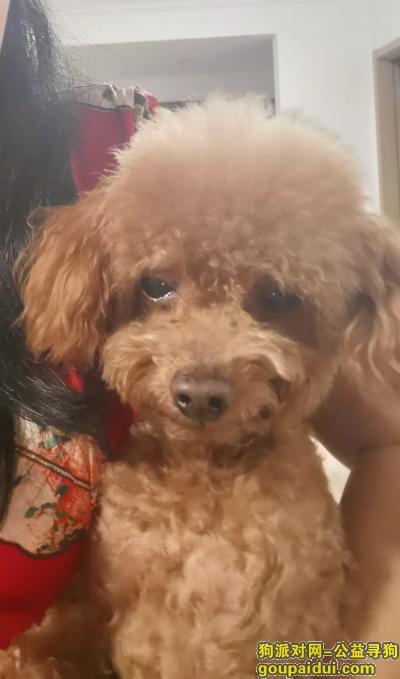 广州找狗,已找到狗请删帖谢谢人间有爱,它是一只非常可爱的宠物狗狗,希望它早日回家,不要变成流浪狗。