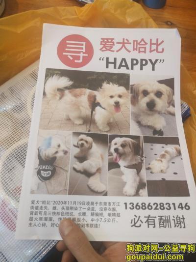 【东莞找狗】,万江区坝头下坝坊走丢,它是一只非常可爱的宠物狗狗,希望它早日回家,不要变成流浪狗。
