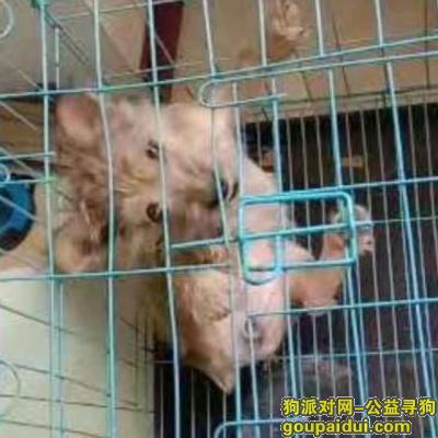 沈阳寻狗,一只雪纳瑞和法斗牛的小串狗, ,6个月了,特征,大耳朵没有尾巴长眉毛长胡子。母狗,它是一只非常可爱的宠物狗狗,希望它早日回家,不要变成流浪狗。