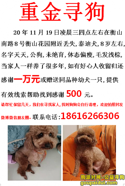 宿迁找狗,宿迁泗洪县衡山南路8号衡山花园酬谢一万元寻找泰迪,它是一只非常可爱的宠物狗狗,希望它早日回家,不要变成流浪狗。