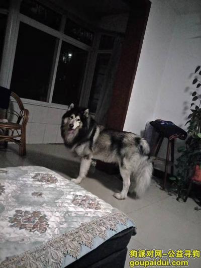 找狗网,找狗 2020年11月初丢失 现金感谢,它是一只非常可爱的狗狗,希望狗狗早日回家,不要变成流浪狗。
